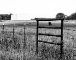 May 21, 2012 Livestock Market Report