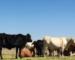 October 13, 2014 Livestock Market Report