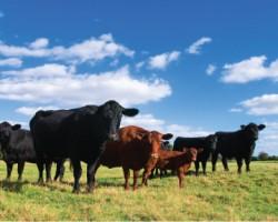June 27, 2016 Livestock Market Report
