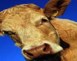 June 1, 2015 Livestock Market Report