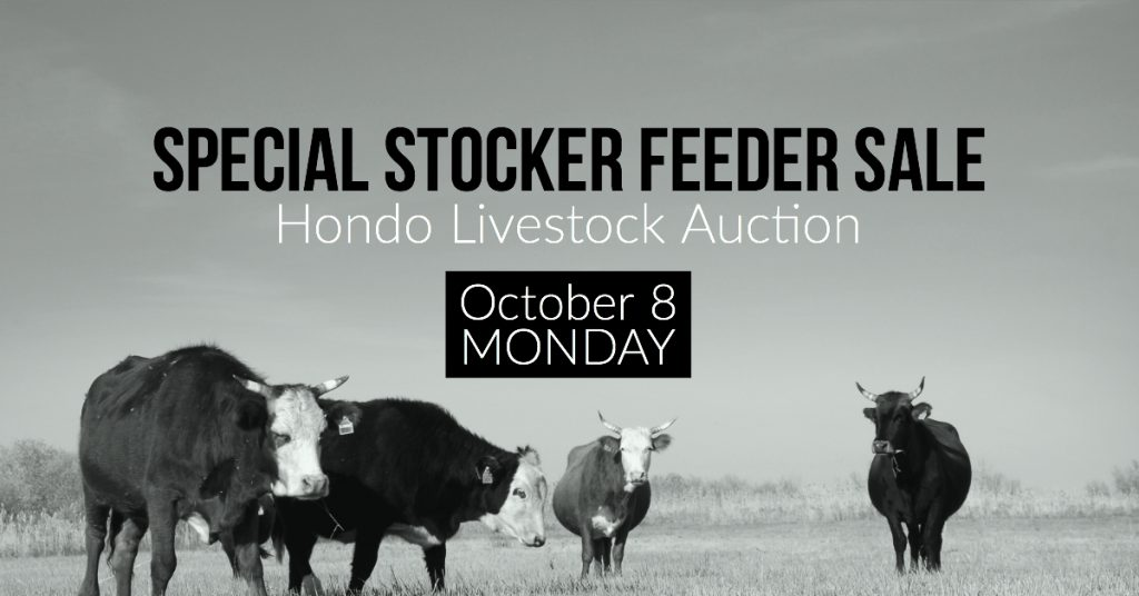 Texas Cattle, Hondo Livestock Auction, Special Sale