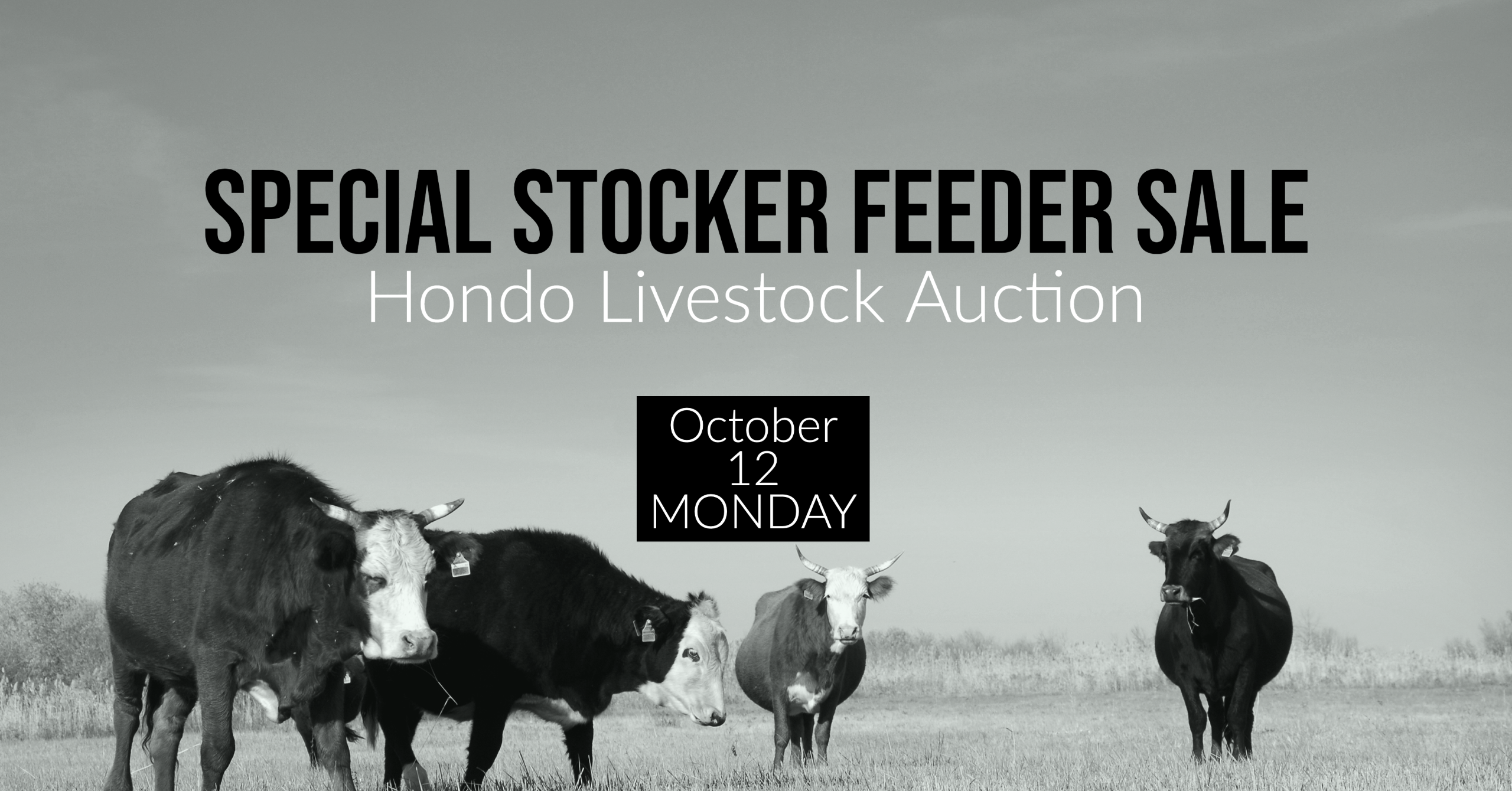 Special Livestock Sale at Hondo Livestock Auction