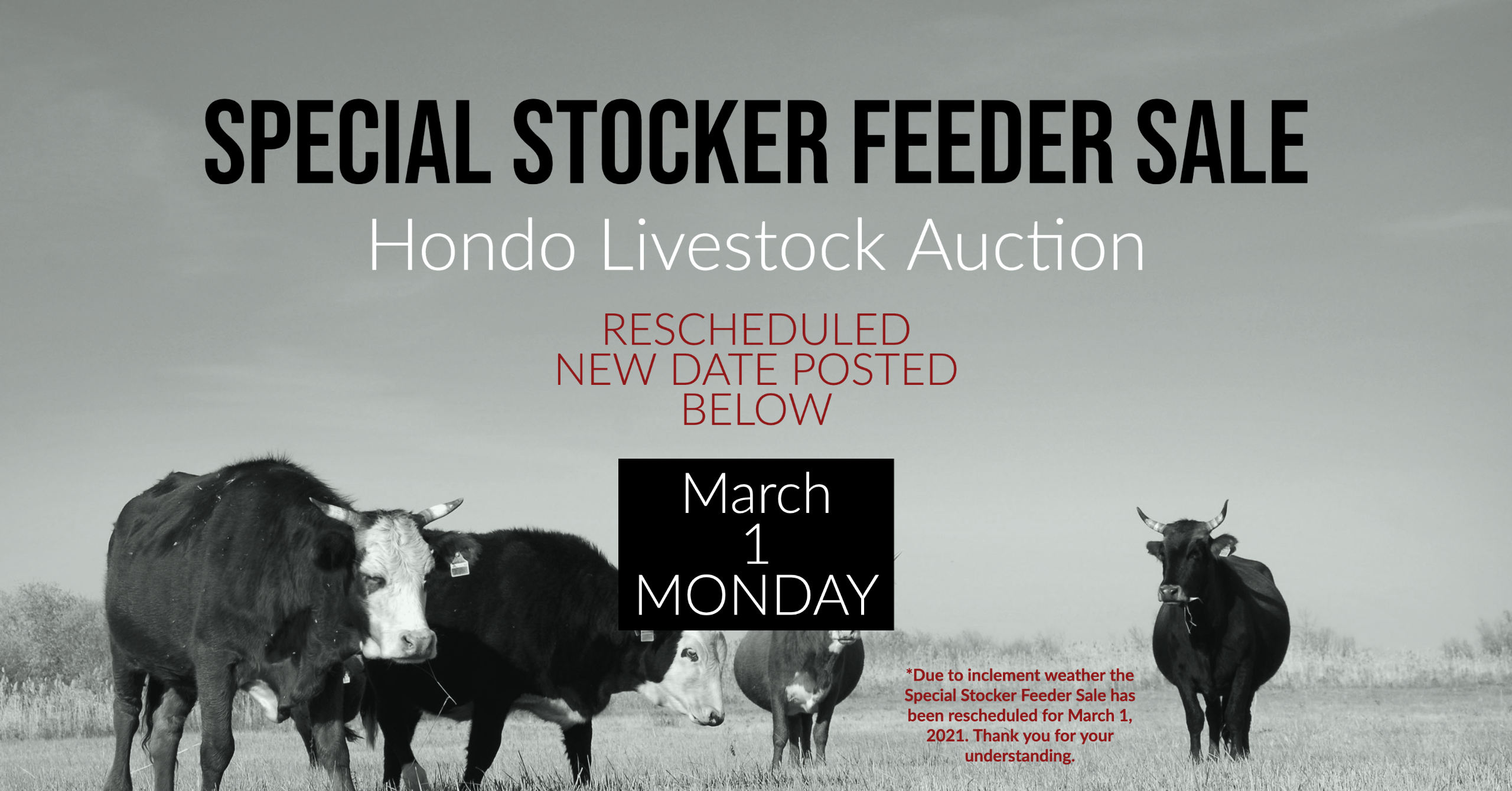 Special Livestock Sale, Cattle Auction, Hondo Livestock